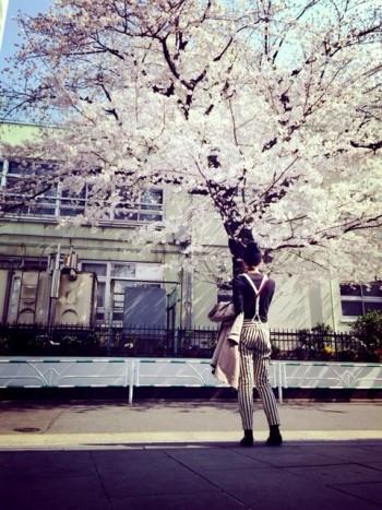 桜の魅力って。imege